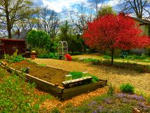arbeta i trädgården täta blommor för Cherry tulpan för röd fjäder upp white Royaltyfria Foton