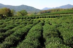 arbeta i trädgården tea Arkivbild