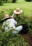 arbeta i trädgården tillsammans arkivfoto