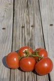 arbeta i trädgården tomater Royaltyfria Foton
