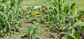 arbeta i trädgården veggiebarn Royaltyfri Bild