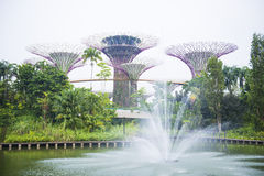 Arbeta i trädgården vid fjärden, SINGAPORE OKTOBER 11, 2015: springbrunn framme Royaltyfria Foton