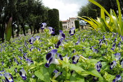 arbeta i trädgården villan vizcaya Royaltyfria Bilder