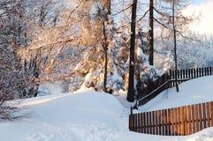 arbeta i trädgården vintern Arkivbild