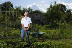 Arbeta i trädgården för hög man Arkivbilder