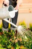 Arbeta i trädgården kvinna som bevattnar växtfjäderterrassen Royaltyfri Fotografi