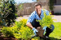arbeta i trädgården manbarn Royaltyfri Bild