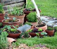 arbeta i trädgården organisk kruka Arkivbild