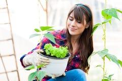 Arbeta i växthus Fotografering för Bildbyråer
