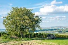 Arbeta i wineyard Royaltyfri Fotografi