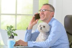 Arbeta med den hemmastadda hunden eller kontor Royaltyfria Bilder