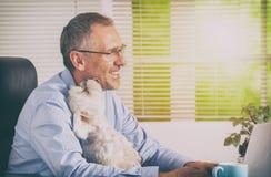 Arbeta med den hemmastadda hunden eller kontor Arkivbilder