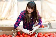 Arbeta med grönsaker Royaltyfri Fotografi