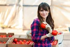Arbeta med grönsaker Royaltyfri Foto
