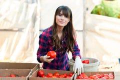 Arbeta med grönsaker Arkivfoto