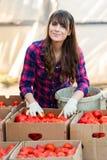 Arbeta med grönsaker Royaltyfri Bild