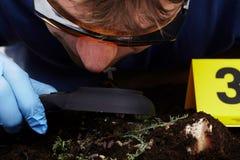Arbeta på att samla av den klipska larven på brottsplats - observera med loupen Arkivbilder