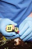 Arbeta på att samla av den klipska larven på brottsplatsen - presentation royaltyfria bilder