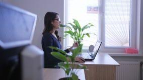 Arbeta på internet, ung kvinna med bärbara datorn på jobbet nära fönster och inomhus växter stock video