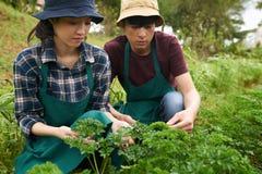 Arbeta på jordbruksmark royaltyfri bild