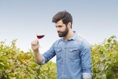 Arbeta på vingården Royaltyfria Bilder