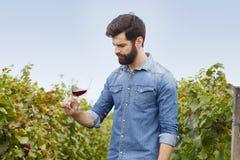 Arbeta på vingården Arkivbilder