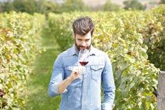 Arbeta på vingården Royaltyfri Bild