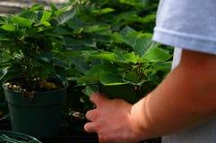 arbetare för 2 växthus arkivfoton