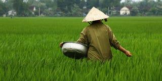 Arbetare i risfält Arkivbild