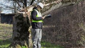 Arbetare med det dokumentation kontrollerade stupade trädet stock video