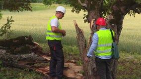 Arbetare near det stupade trädet stock video