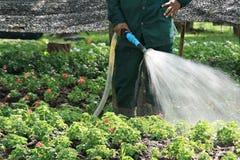 Arbetare som bevattnar blomman Arkivbilder