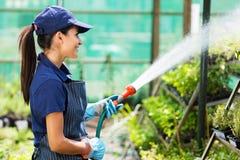 Arbetare som bevattnar växten Royaltyfri Foto