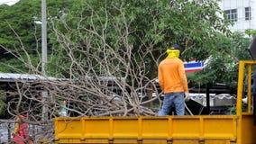 Arbetare som laddar filialer in i lastbilar arkivfilmer