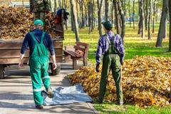 Arbetare som tar bort stupade sidor i höst i stadsparl säsongsbetonad lövverklokalvård i nedgång Ladda upp avskräde in i lastbile royaltyfria foton