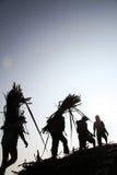 Arbetare som transporterar rottingen i lastbil Royaltyfri Foto