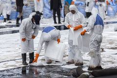 Arbetare tar bort och gör ren upp spilld råolja med absorberande välling Royaltyfri Foto