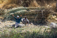 Arbetare tar ett avbrott från bitande vasser längs den västra banken av flodNilen nära Aswan i Egypten Royaltyfri Fotografi