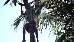 Arbetaren drar upp grupp av kokosnötter och snitt med macheten lager videofilmer