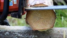 Arbetaren gör sawing i en journal, som ska tjäna som som basen för golvet i ett träfält med en chainsaw arkivfilmer