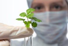 Arbetaren i skyddande kläder rymmer en grön plantanärbild som isoleras på vit royaltyfria bilder
