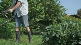 Arbetaren klipper gräset genom att använda en gräsklippare stock video