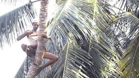Arbetaren knäpper fast palmträdstammen och fixar den speciala pinnen stock video