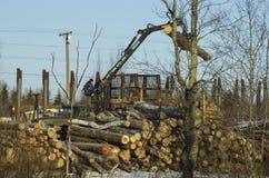 Arbetaren på laddaren av journaler sätter stammar av träd arkivfoto