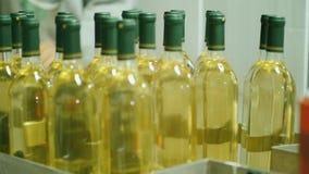 Arbetaren tar flaskor av vitt vin från transportören Arbeta i vinodlingen, begrepp för vinbransch stock video