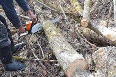 Arbetarhänder med bitande träd för bensinChainsaw Mannen med bensinbensinkedjan såg trädklipp i skogen arkivbild