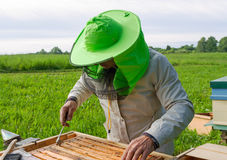 Arbete av beekeeperen Royaltyfri Foto