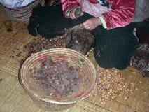 Arbete av en arbetare i arganolja, sydliga Marocko arkivbilder