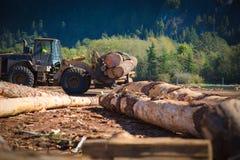 Arbete för biltransport för skogbranschtrcuk Royaltyfri Foto