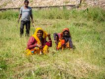 Arbete för kvinna` s i Indien royaltyfria foton